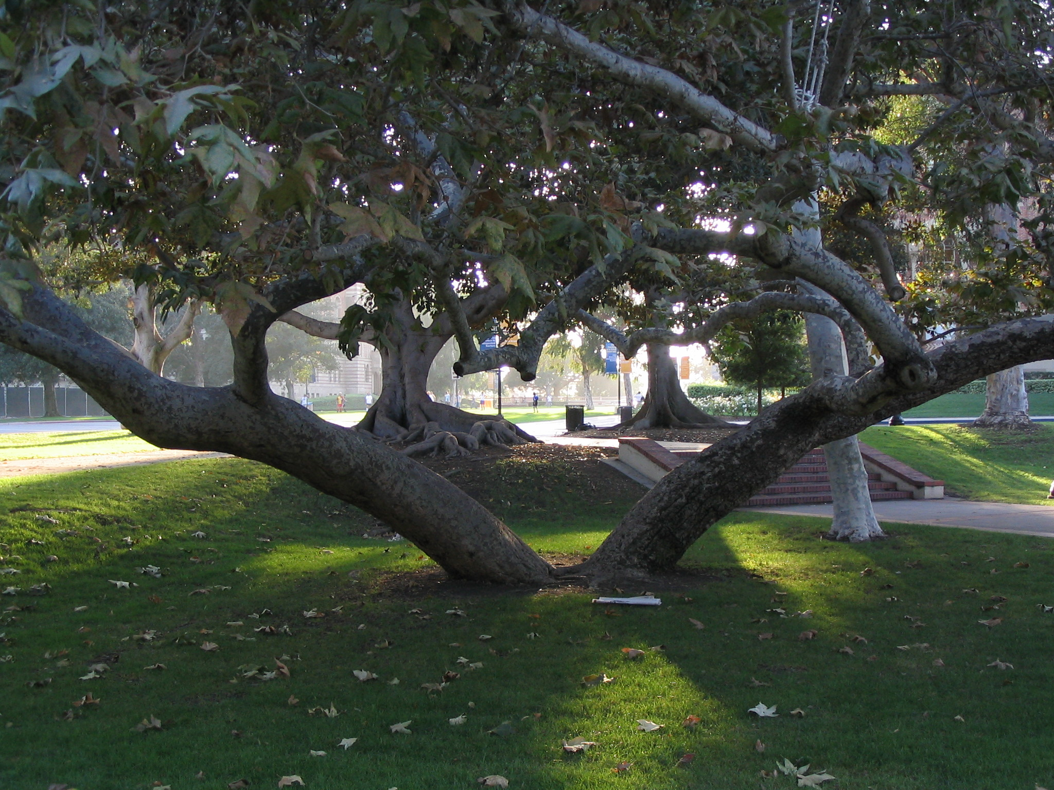 Two unique trees for Unusual small trees